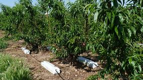 Foto de Fruitponic, de Grupo Projar, aumenta el peso de los frutos en la producción frutícola con reducciones hídricas