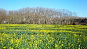 Foto de Nuevas variedades comerciales de colza evaluadas en la red de ensayos de Cataluña