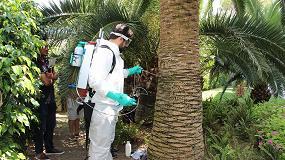 Foto de TreeCare muestra la eficacia de la Gestión Integrada de plagas como el picudo rojo de las palmeras