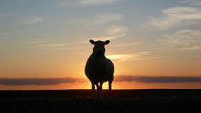 Fotografia de Unión de Uniones pide ser inflexible ante el riesgo de entrada de ovino en España con fiebre aftosa