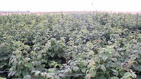 Foto de Proyecto de investigación para desarrollar un método de identificación molecular que mejore la calidad en variedades vegetales