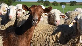 Foto de El IRTA-CReSA investigará la relación entre casos de la enfermedad de Creutzeldt Jackob esporádico y las enfermedades priónicas de cabras y ovejas