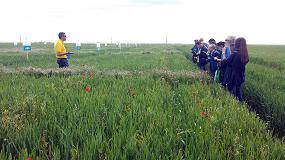 Foto de Serrate: nuevo herbicida de post emergencia para el control de Bromus spp en cereal de invierno
