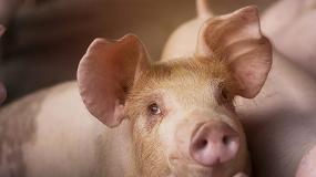 Foto de IRTA y AENOR promueven el bienestar animal a través del desarrollo de una certificación pionera en Europa