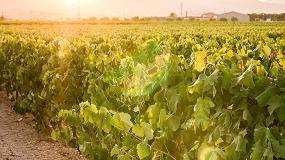Foto de El futuro del vino del Penedès