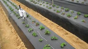 Foto de Ferdoñana, un proyecto que contribuye al ahorro de agua en el cultivo de frutos rojos