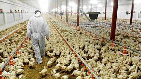 Foto de Plan Nacional frente a la Resistencia a los Antibióticos: retos y avances en los sectores de producción animal