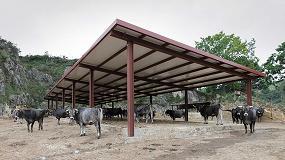 Foto de Cantabria renueva el sistema de identificación y registro del ganado bovino