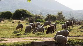 Foto de Decálogo de pastores de ovejas y cabras para la prevención de incendios forestales