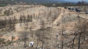 Foto de Eurofred compensará sus emisiones de CO2 con repoblaciones forestales