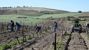 Foto de Madera de poda como sustituta de sulfitos en la elaboración de vino tinto