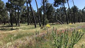 Foto de El Gobierno crea el Consejo Forestal Nacional, órgano de participación de carácter consultivo