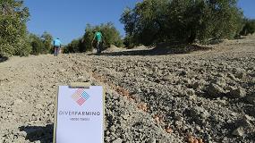 Foto de El azafrán se hace hueco en las calles del olivar