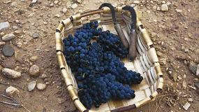 Foto de La DO Navarra finaliza su vendimia con 78 millones de kilos de uva recogidos