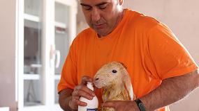Foto de Innovador producto lácteo de ovejas alimentadas con chía