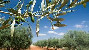 Foto de Relaciones entre el riego de olivar y la calidad del Aceite de Oliva Virgen Extra (AOVE)