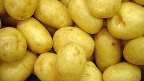 Foto de España cerrará la campaña de patata con un 15% menos de producción