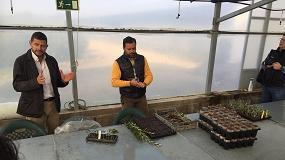 Foto de Todolivo muestra nuevas variedades obtenidas en su Programa de Mejora Genética