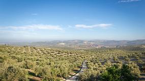 Foto de El olivar: mayor cultivo permanente a nivel mundial