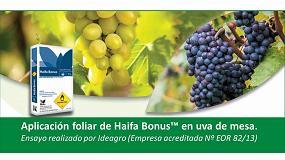 Foto de Evaluación de la eficacia de la aplicación foliar de Haifa Bonus 12-5-42 en uva de mesa