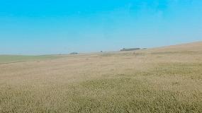 Foto de San Isidro Labrador no augura una buena cosecha de cereal