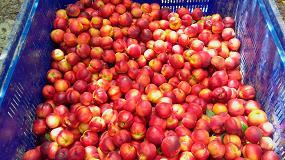 Foto de Fruticultores denuncian retrasos de seis meses en los cobros