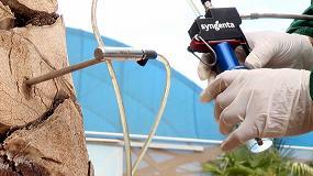Foto de España aprueba el registro del insecticida Revive II contra el picudo rojo de las palmeras