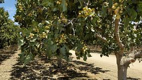 Foto de La superficie de cultivo de pistacho en España aumenta un 30% en un año