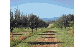 Foto de Almendra de Montaña, un proyecto para adaptar las nuevas variedades de almendro en regadío