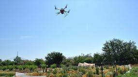 Foto de Selección de cereales mediante drones para la producción de bioetanol