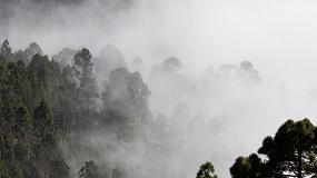 """Foto de """"Clean Forest"""": valorizar a floresta e os resíduos"""