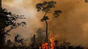 Foto de EUA e Brasil lançam fundo de 100 milhões para biodiversidade na Amazónia