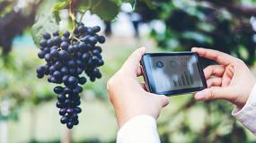 Foto de Big Data para una viticultura eficiente