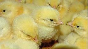 Foto de El IRTA, nuevo Centro de referencia de la UE para el bienestar avícola y de conejos