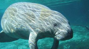 Foto de Investigação portuguesa sobre mamíferos marinhos em debate em Lisboa a 15 de novembro