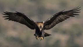 """Foto de Castro Verde debate """"Conservação de Aves de Rapina"""""""
