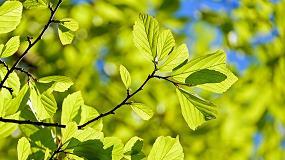 Foto de Quercus apoia Acordo Verde para a Europa e novo Programa de Ação Ambiental do EEB