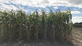 Foto de Agricultores y ganaderos perciben más de 7.411 M€ de ayudas PAC