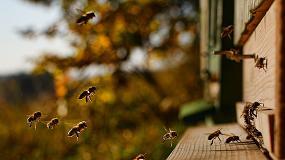 Foto de Apicultura sustentável: consórcio europeu desenvolve colmeias inteligentes de baixo custo