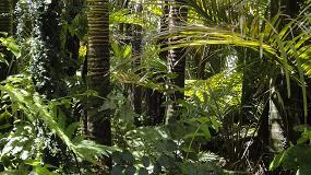 Foto de UTAD é parceira de projeto europeu no âmbito da regeneração das florestas