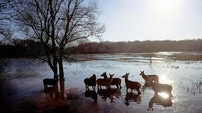 Foto de Vitoria destina 377.259 euros para conservar la vegetación del Anillo Verde