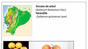 Foto de Proyecto para el desarrollo de nuevas variedades de naranjilla y tomate de árbol