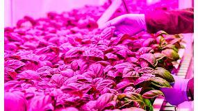 Foto de Iluminación LED para cultivos de horticultura