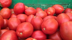 Foto de Ecoculture adelanta en hasta cinco días la coloración cultivos como pimiento y tomate