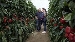 Foto de Mayores resistencias por un cultivo del pimiento más sostenible, novedades de Syngenta