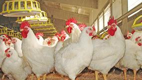 Foto de En marcha el centro de referencia para el bienestar de las aves de corral y otros animales pequeños de granja