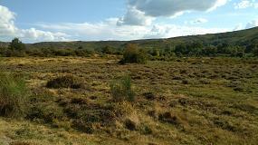 Foto de Pelo menos 14% dos locais da rede Natura 2000 da Península Ibérica Ocidental estão em risco de eutrofização
