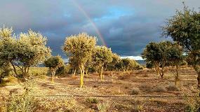 Foto de El proyecto Tubersystems pretende mejorar el cultivo de la trufa negra y su sostenibilidad