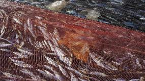 Foto de Soluciones avanzadas para reducir las capturas no deseadas en la pesca de arrastre
