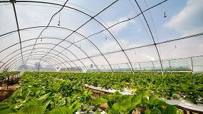 Foto de España avanza en la gestión de los residuos plásticos agrícolas con la creación de Mapla